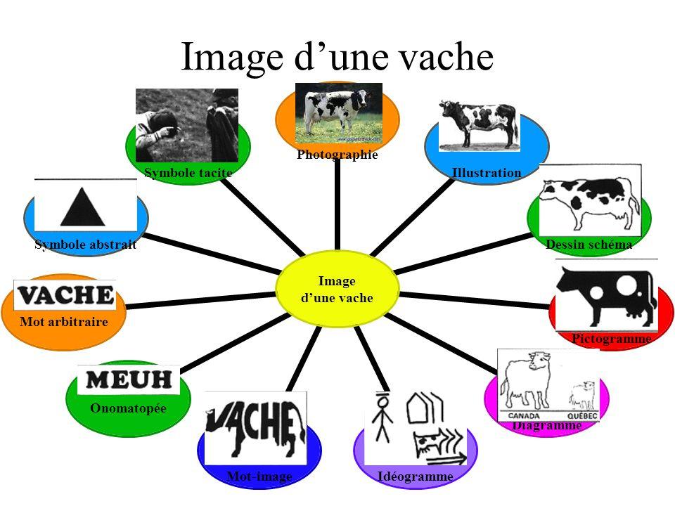 Image d'une vache