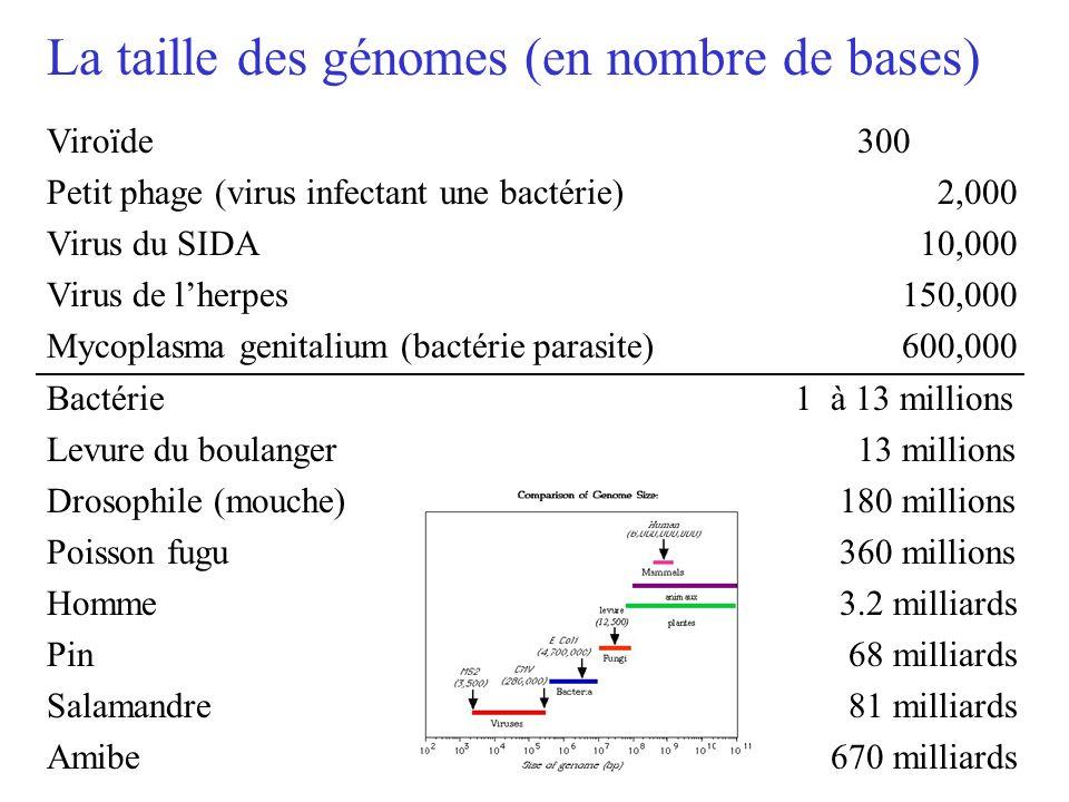 La taille des génomes (en nombre de bases)