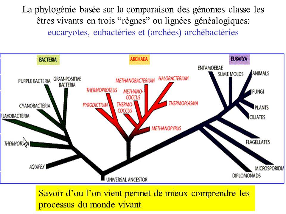 La phylogénie basée sur la comparaison des génomes classe les êtres vivants en trois règnes ou lignées généalogiques: eucaryotes, eubactéries et (archées) archébactéries