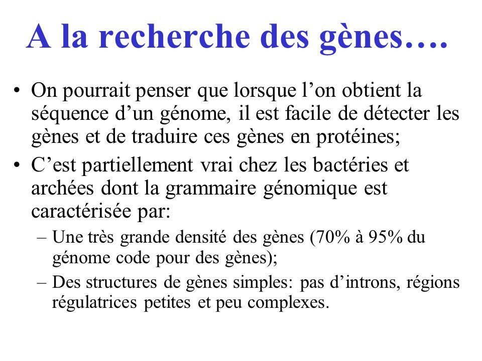 A la recherche des gènes….