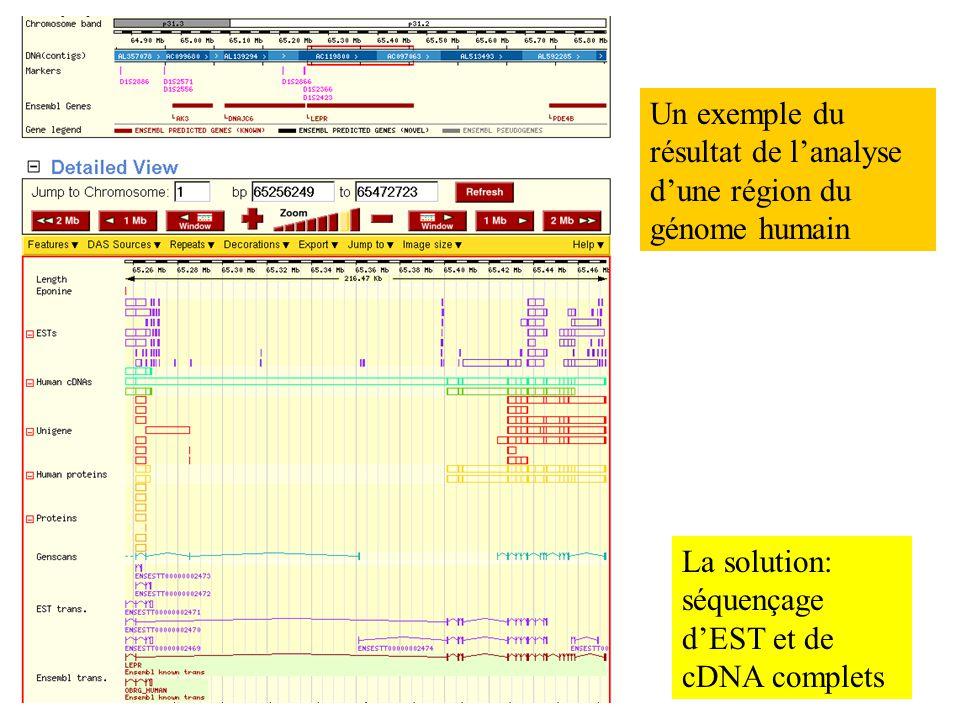 Un exemple du résultat de l'analyse d'une région du génome humain