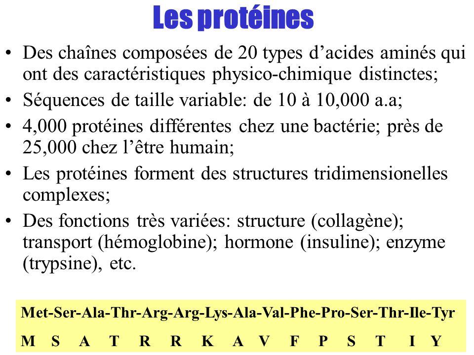 Les protéines Des chaînes composées de 20 types d'acides aminés qui ont des caractéristiques physico-chimique distinctes;