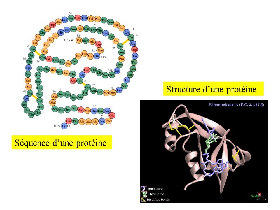 Structure d'une protéine
