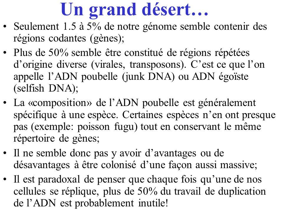Un grand désert… Seulement 1.5 à 5% de notre génome semble contenir des régions codantes (gènes);
