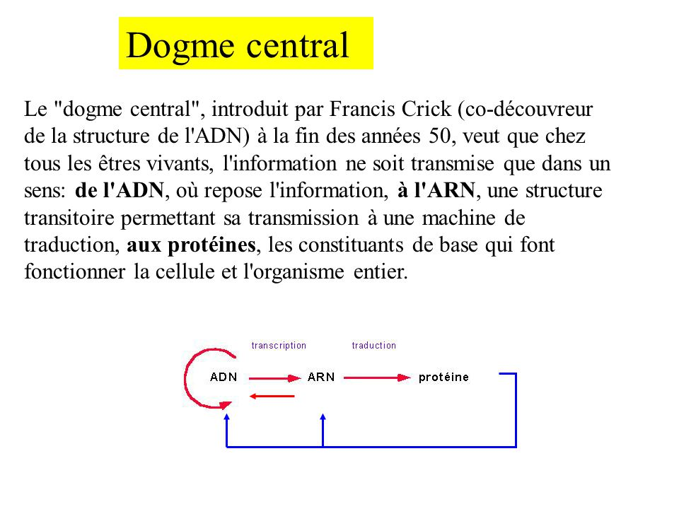 Dogme central