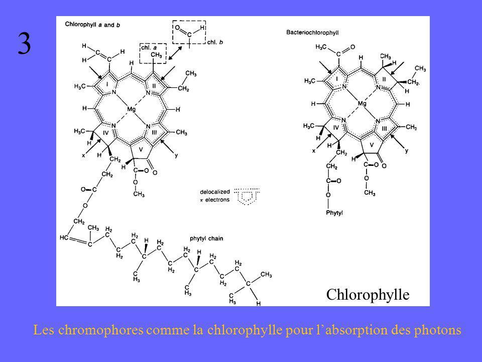 3 Chlorophylle Les chromophores comme la chlorophylle pour l'absorption des photons