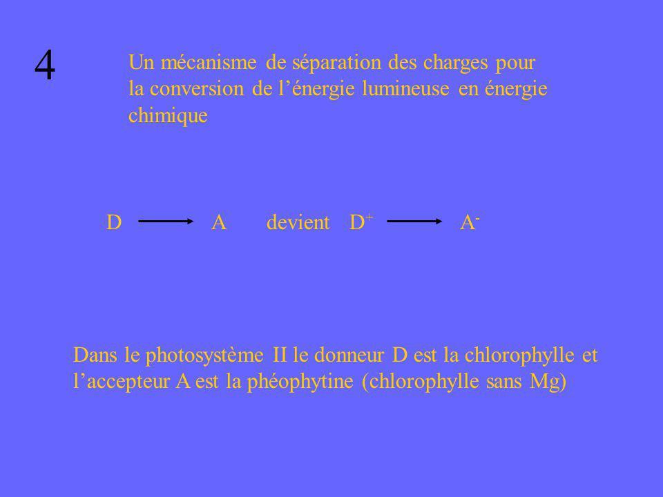 4 Un mécanisme de séparation des charges pour la conversion de l'énergie lumineuse en énergie chimique.