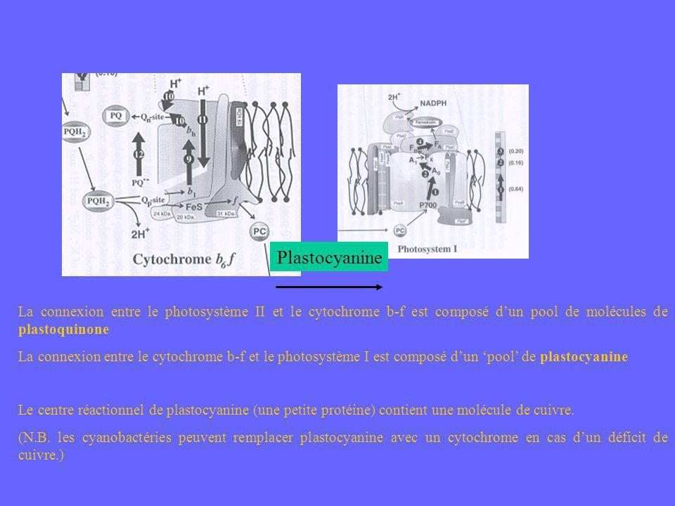 Plastocyanine La connexion entre le photosystème II et le cytochrome b-f est composé d'un pool de molécules de plastoquinone.