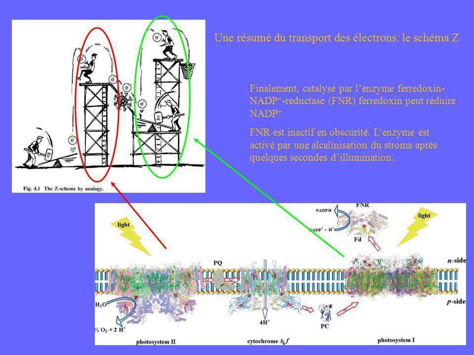 Une résumé du transport des électrons: le schéma Z