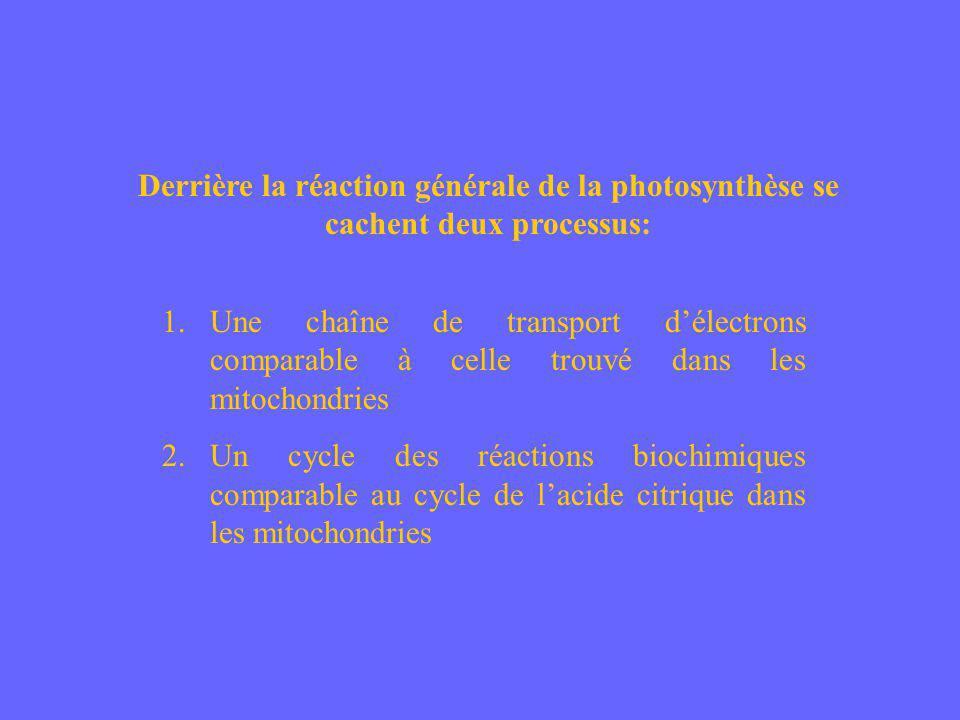 Derrière la réaction générale de la photosynthèse se cachent deux processus: