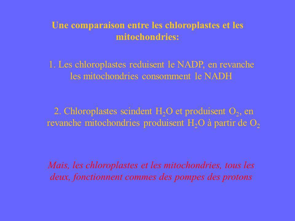 Une comparaison entre les chloroplastes et les mitochondries: