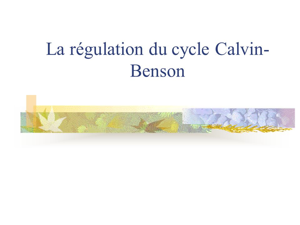 La régulation du cycle Calvin-Benson