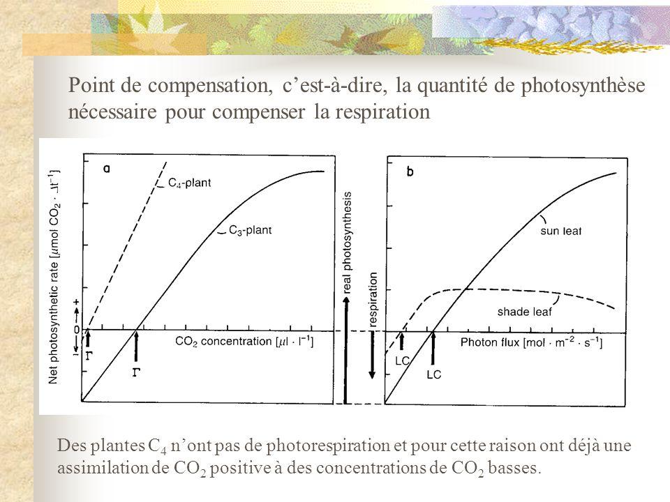 Point de compensation, c'est-à-dire, la quantité de photosynthèse
