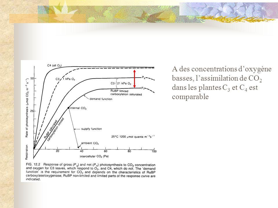 A des concentrations d'oxygène basses, l'assimilation de CO2 dans les plantes C3 et C4 est comparable