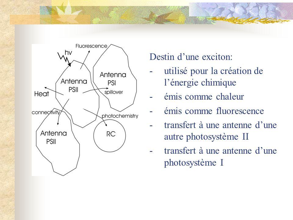 Destin d'une exciton: - utilisé pour la création de l'énergie chimique. - émis comme chaleur. - émis comme fluorescence.