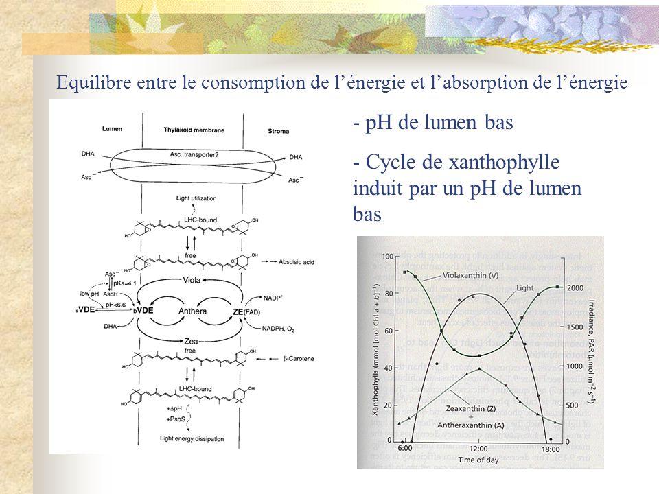 Cycle de xanthophylle induit par un pH de lumen bas