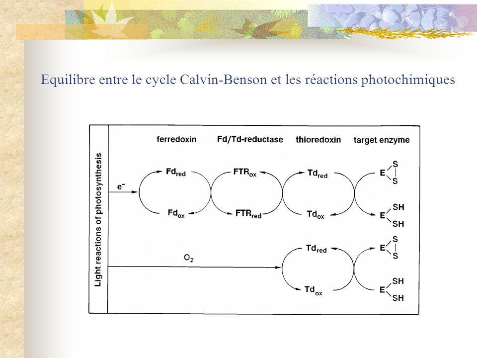 Equilibre entre le cycle Calvin-Benson et les réactions photochimiques