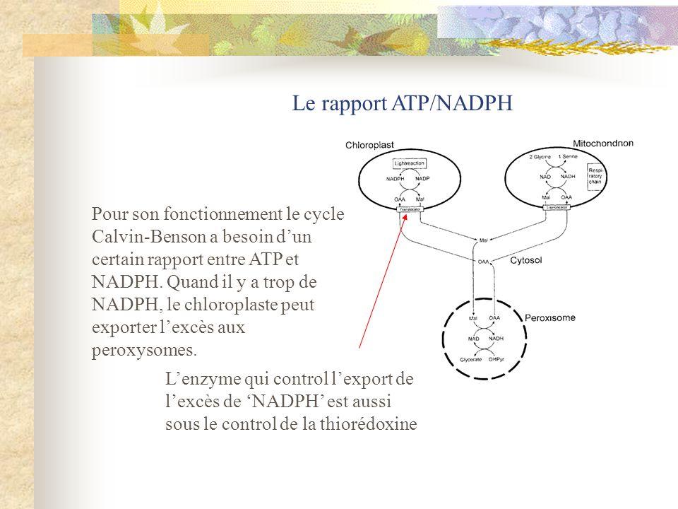 Le rapport ATP/NADPH