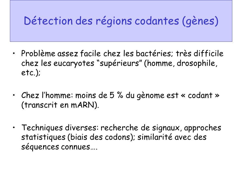 Détection des régions codantes (gènes)