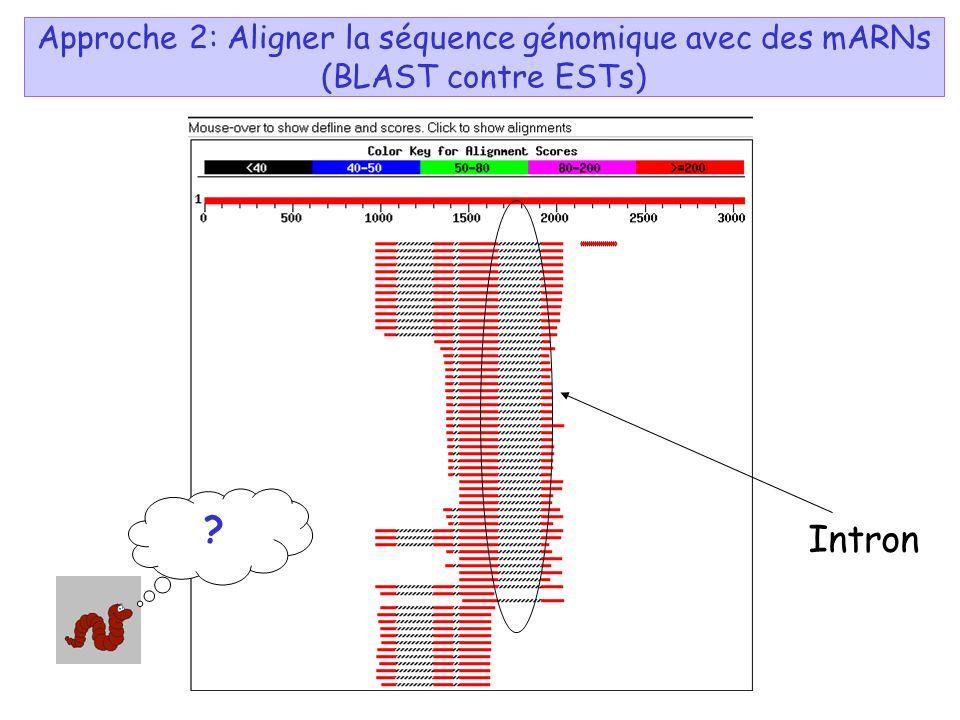 Approche 2: Aligner la séquence génomique avec des mARNs (BLAST contre ESTs)