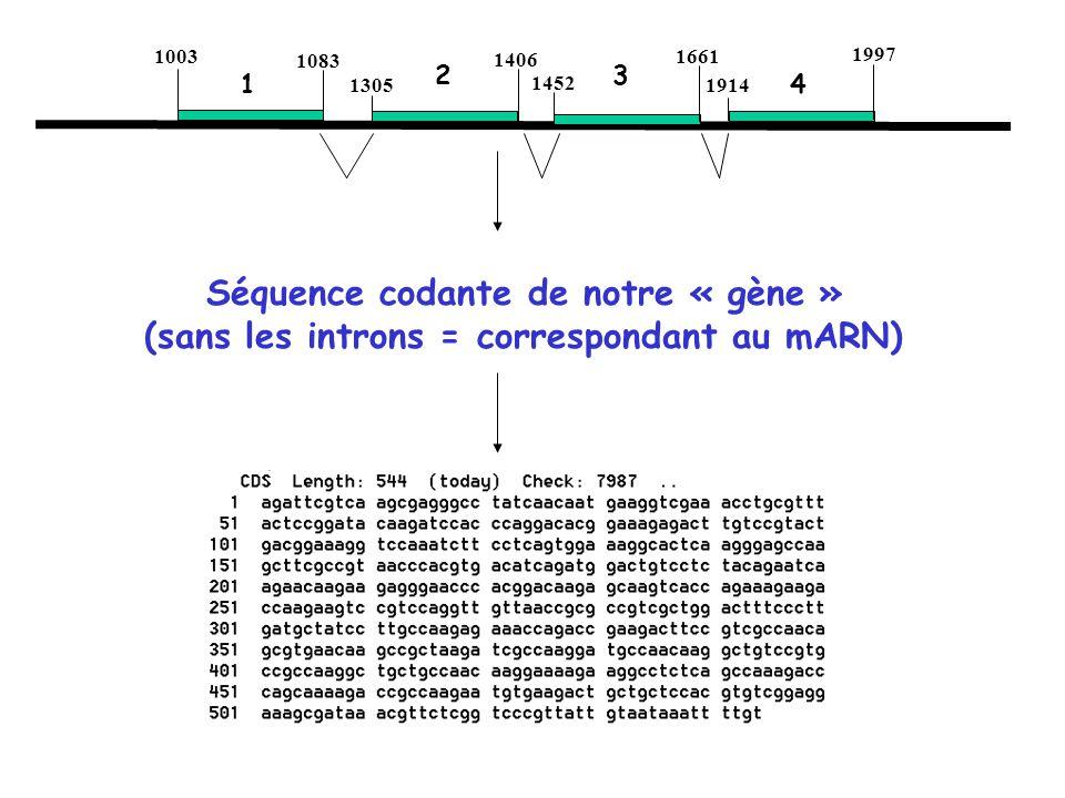 Séquence codante de notre « gène »