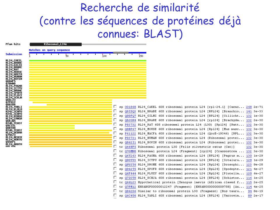 Recherche de similarité (contre les séquences de protéines déjà connues: BLAST)