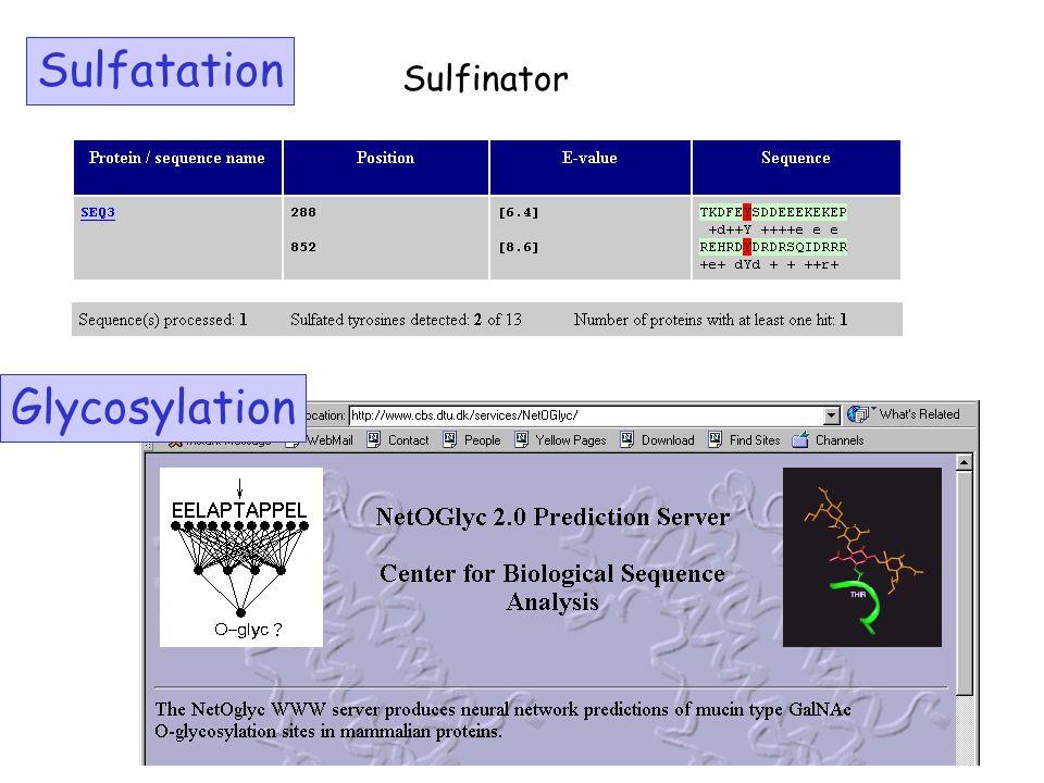Sulfatation Sulfinator Glycosylation