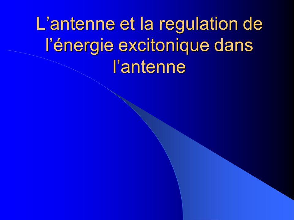 L'antenne et la regulation de l'énergie excitonique dans l'antenne