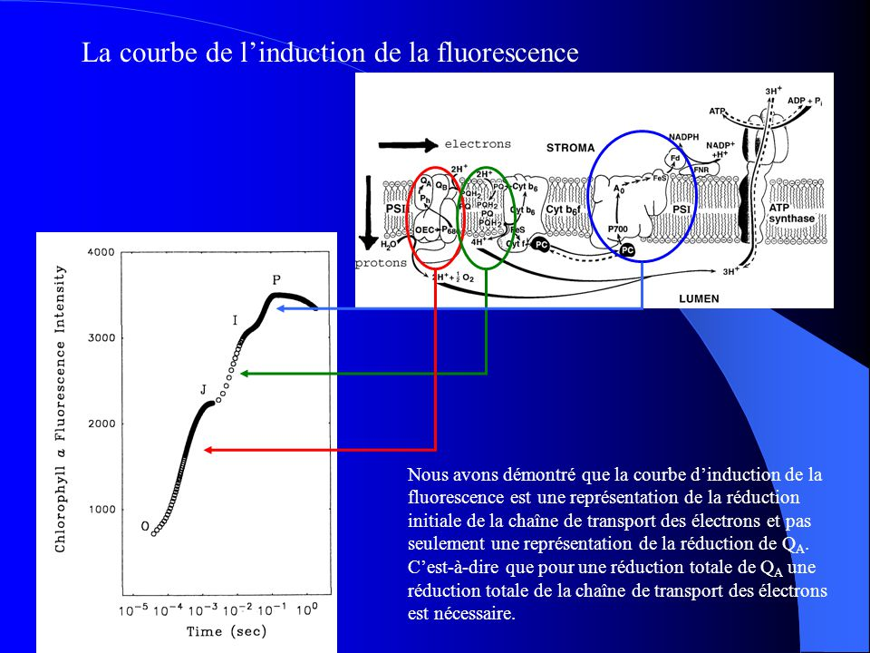 La courbe de l'induction de la fluorescence