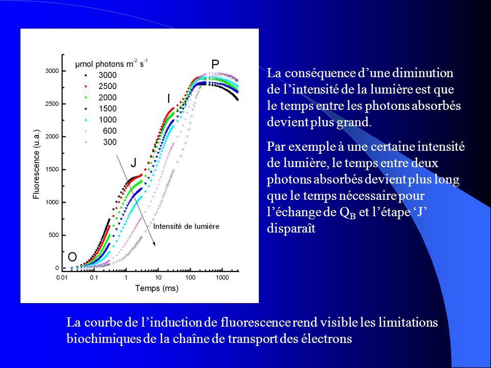 La conséquence d'une diminution de l'intensité de la lumière est que le temps entre les photons absorbés devient plus grand.