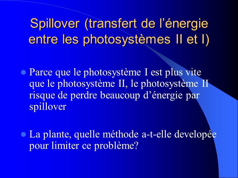 Spillover (transfert de l'énergie entre les photosystèmes II et I)