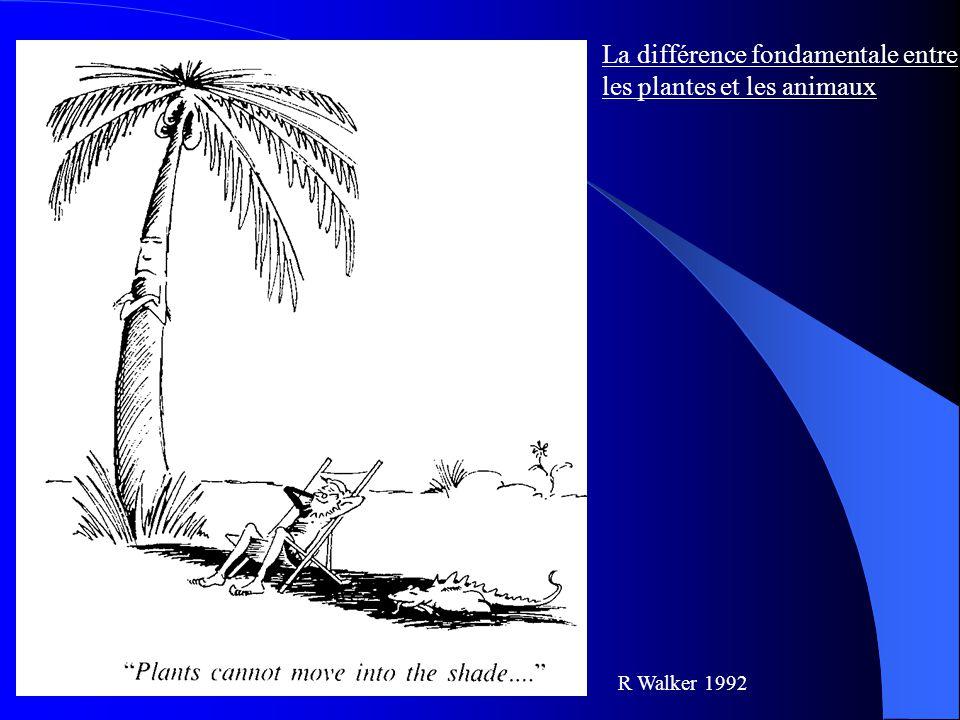 La différence fondamentale entre les plantes et les animaux