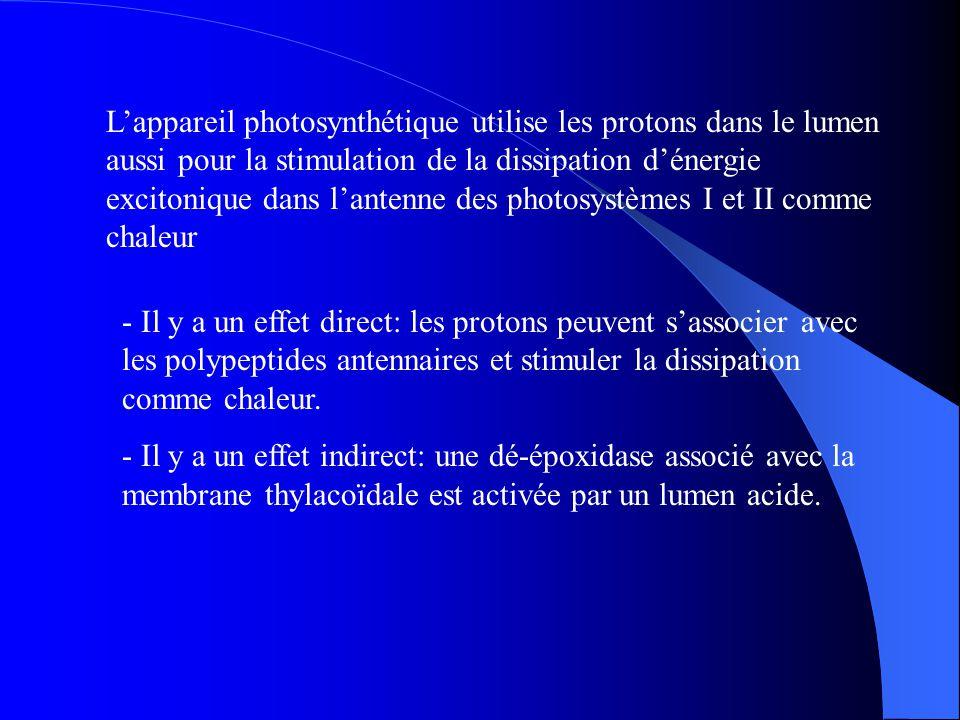 L'appareil photosynthétique utilise les protons dans le lumen aussi pour la stimulation de la dissipation d'énergie excitonique dans l'antenne des photosystèmes I et II comme chaleur
