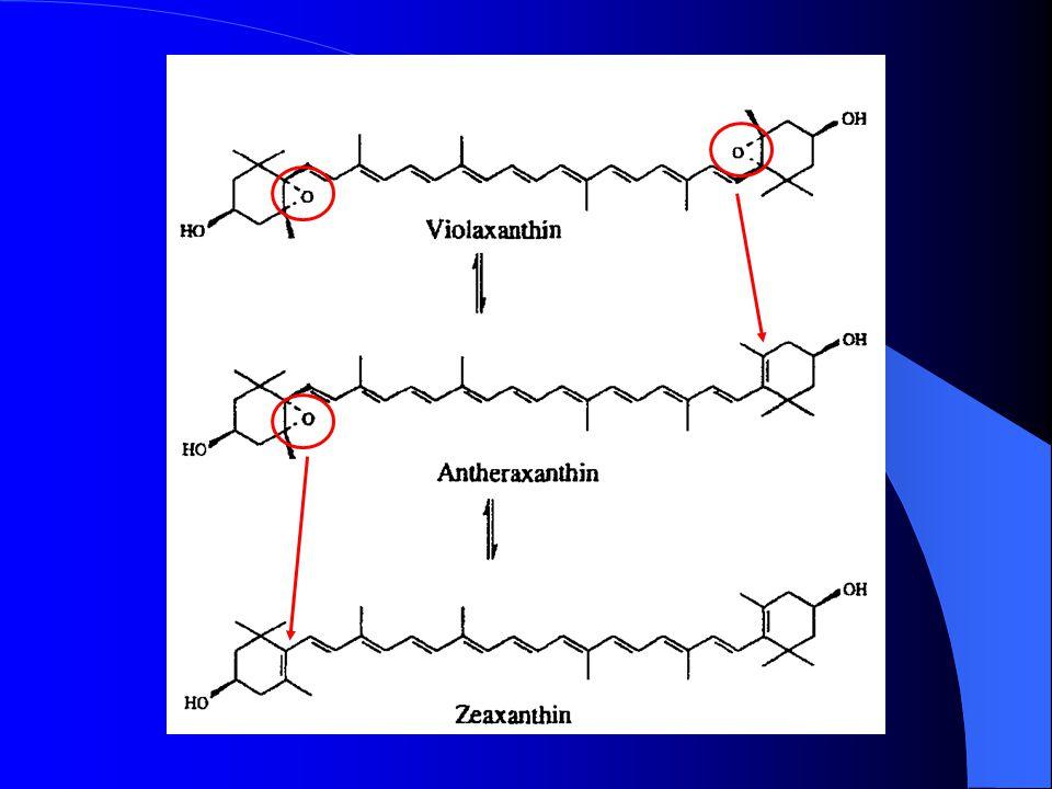 dé-époxydase dé-époxydase