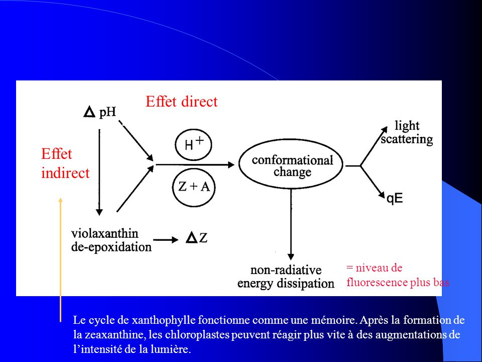 Effet direct Effet indirect = niveau de fluorescence plus bas