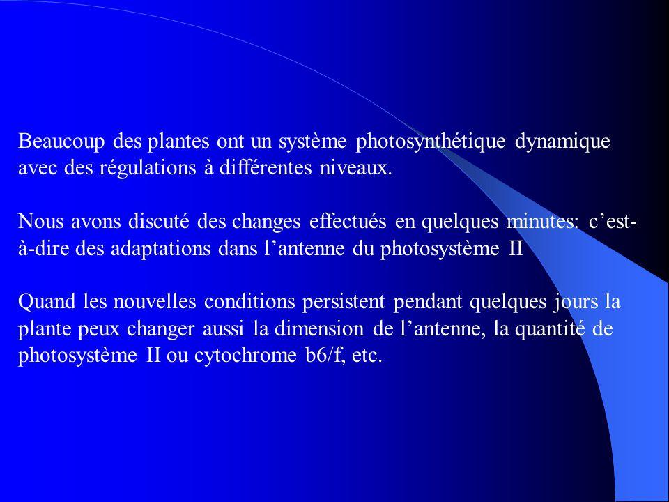 Beaucoup des plantes ont un système photosynthétique dynamique