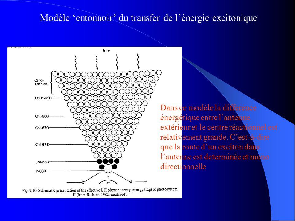 Modèle 'entonnoir' du transfer de l'énergie excitonique