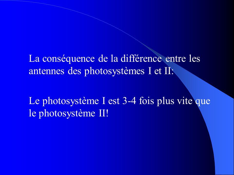 La conséquence de la différence entre les antennes des photosystèmes I et II: