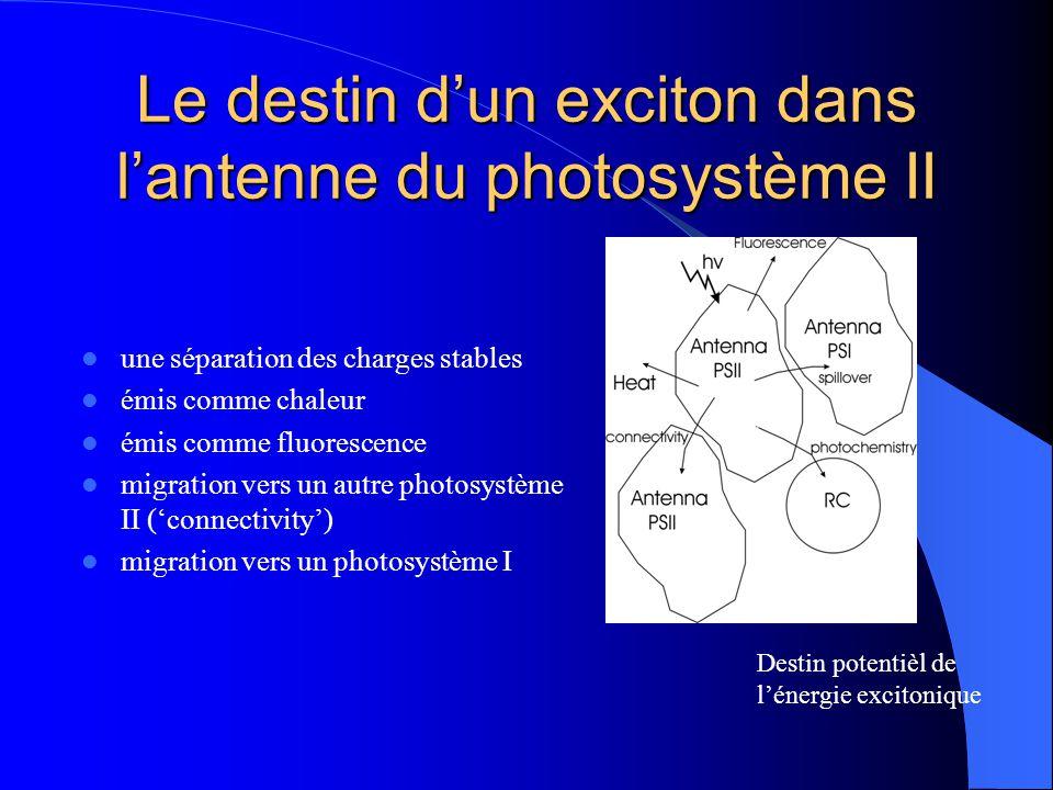 Le destin d'un exciton dans l'antenne du photosystème II