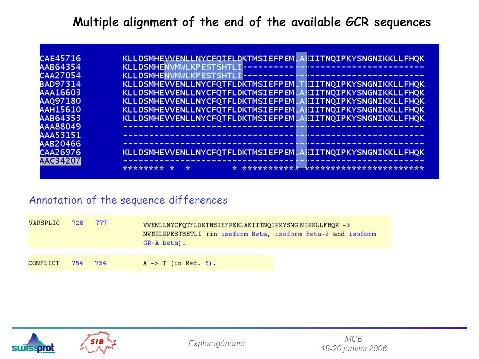 Multiple alignment of the end of the available GCR sequences