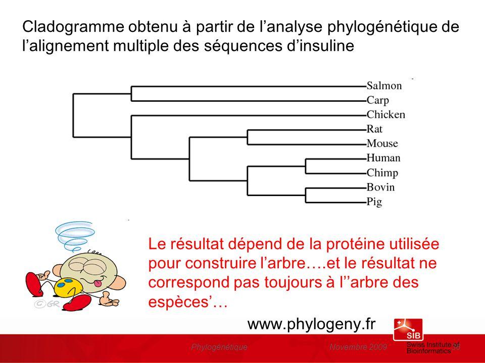 Cladogramme obtenu à partir de l'analyse phylogénétique de l'alignement multiple des séquences d'insuline