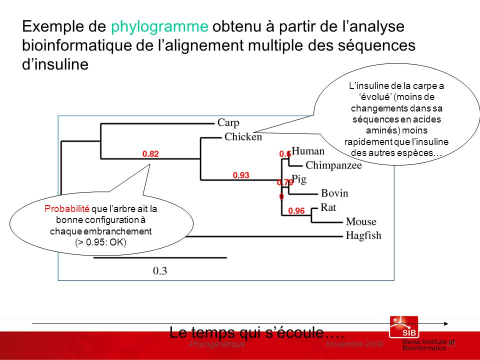 Exemple de phylogramme obtenu à partir de l'analyse bioinformatique de l'alignement multiple des séquences d'insuline