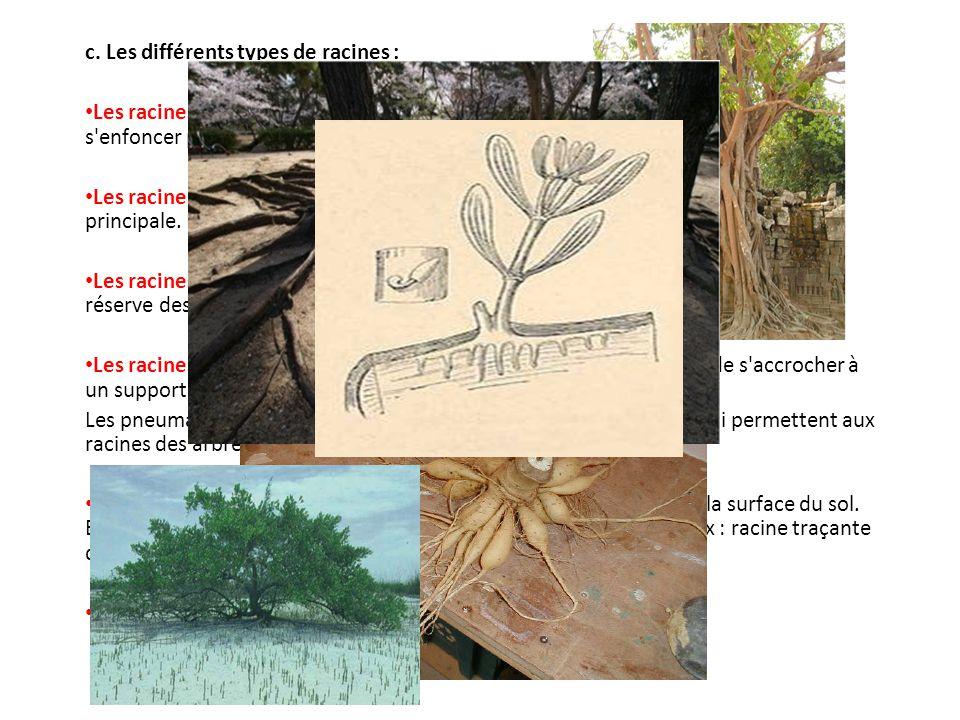 c. Les différents types de racines :