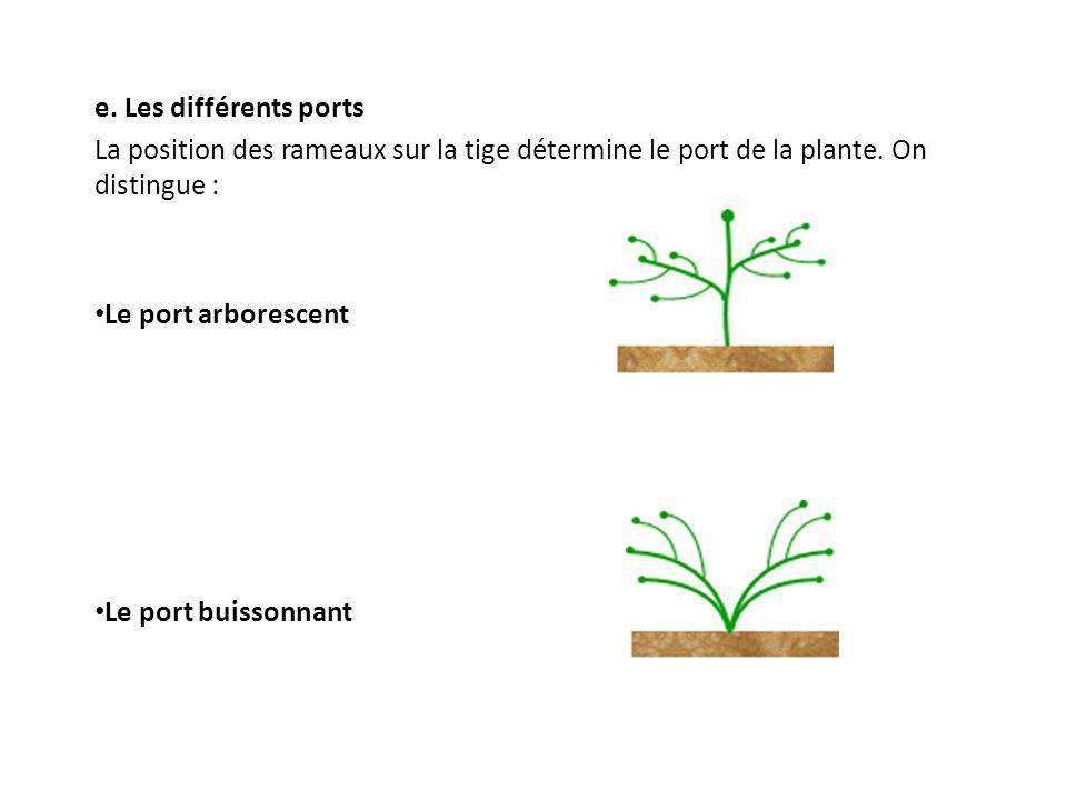 e. Les différents ports La position des rameaux sur la tige détermine le port de la plante. On distingue :