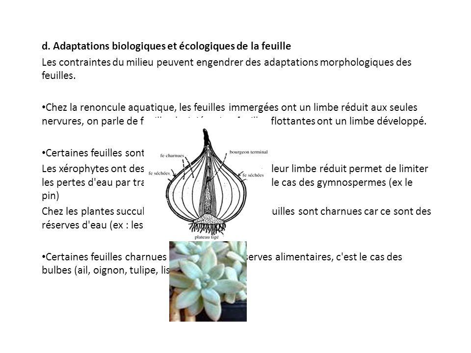 d. Adaptations biologiques et écologiques de la feuille