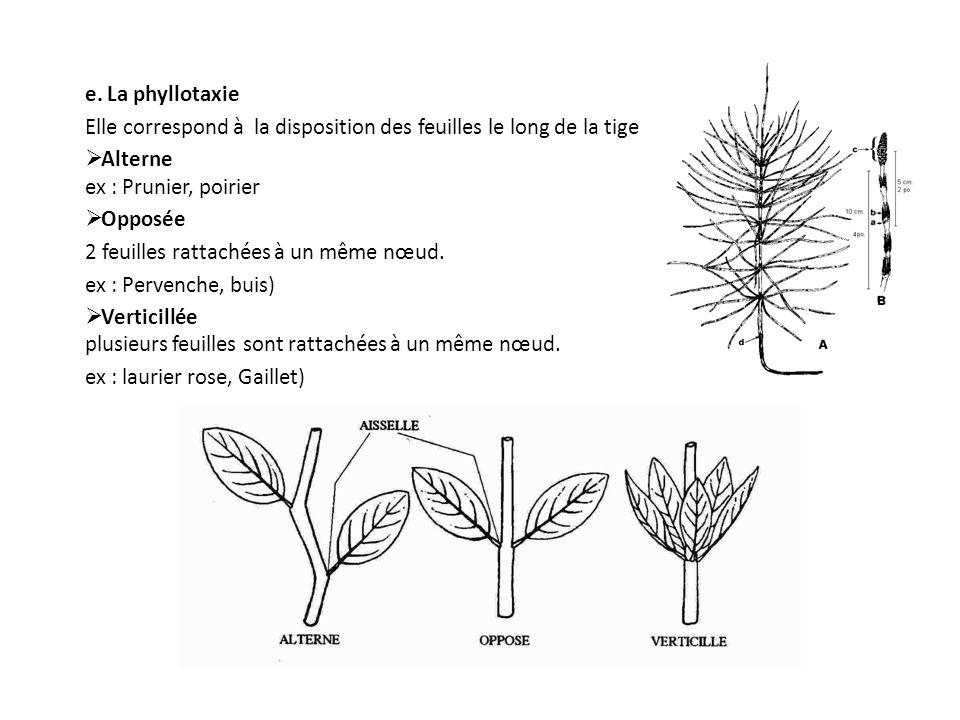e. La phyllotaxie Elle correspond à la disposition des feuilles le long de la tige. Alterne ex : Prunier, poirier.
