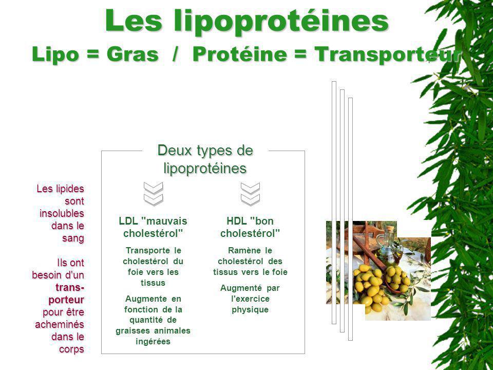 Les lipoprotéines Lipo = Gras / Protéine = Transporteur