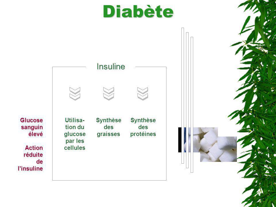 Utilisa-tion du glucose par les cellules Synthèse des protéines