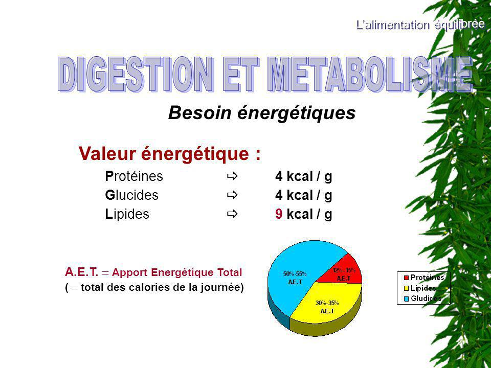 DIGESTION ET METABOLISME