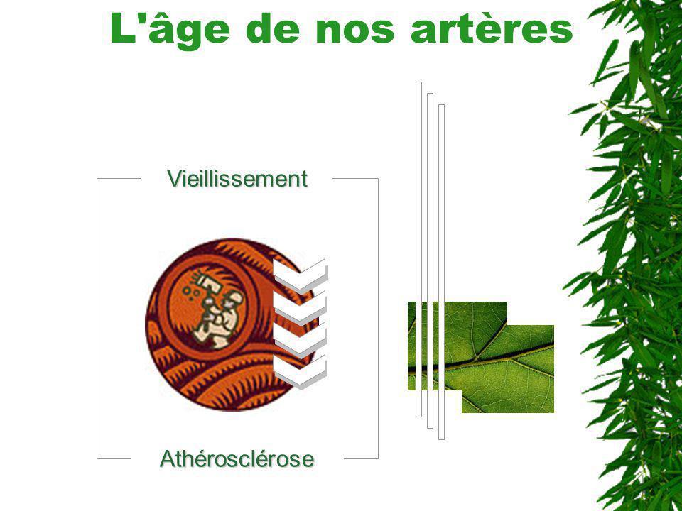 L âge de nos artères Vieillissement Athérosclérose